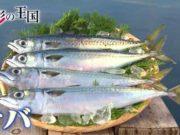 """取材協力させて頂きました、テレビ朝日""""食彩の大国""""第770回サバで当店が放送されました。"""